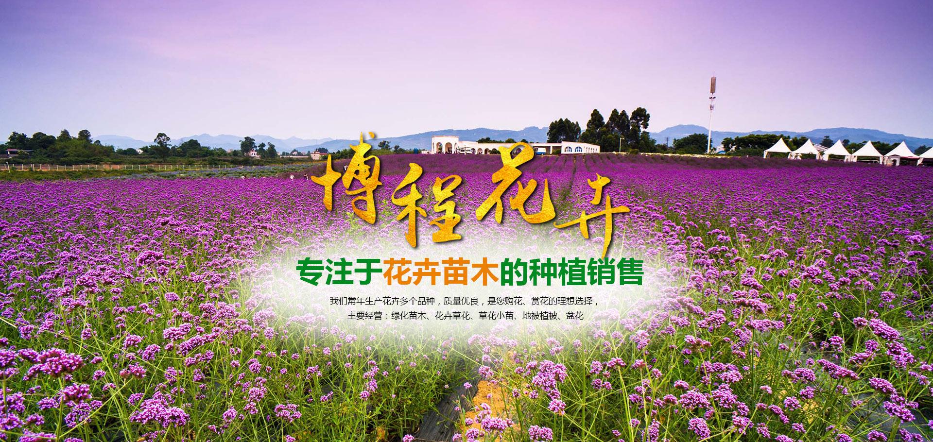 青州市beplayer体育下载beplay体育ios版下载苗木有限公司